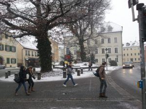 Weiden in winter.