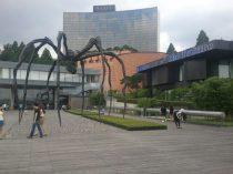 korea_spider