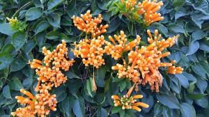 brisbane_flowers2